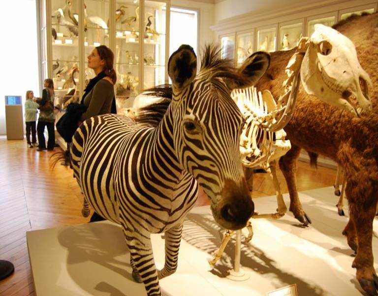 Naturkundemuseum von La Rochelle