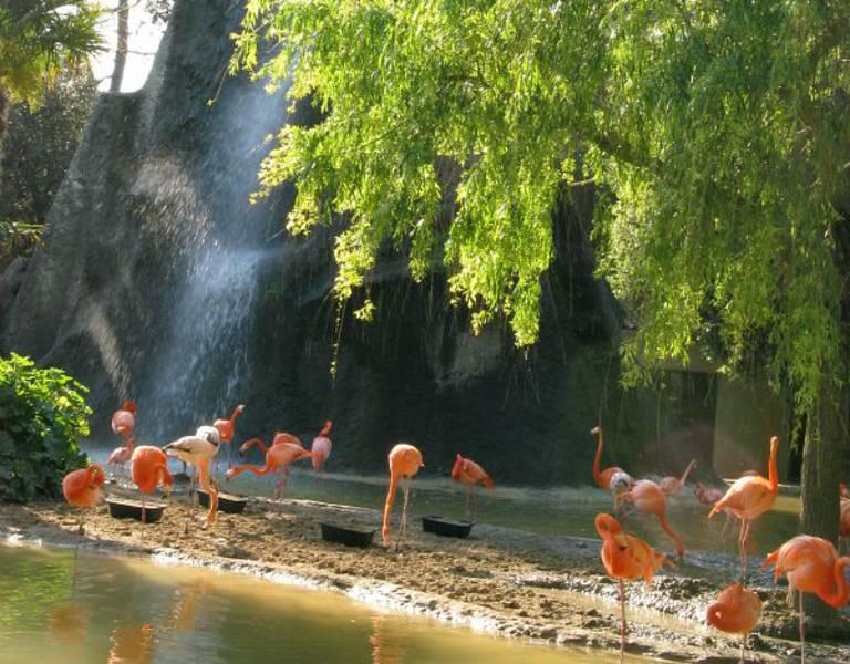 Der Zoo La Palmyre
