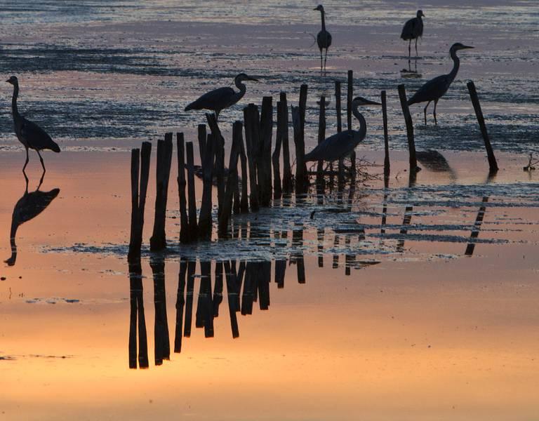 Beobachtung der Vögel