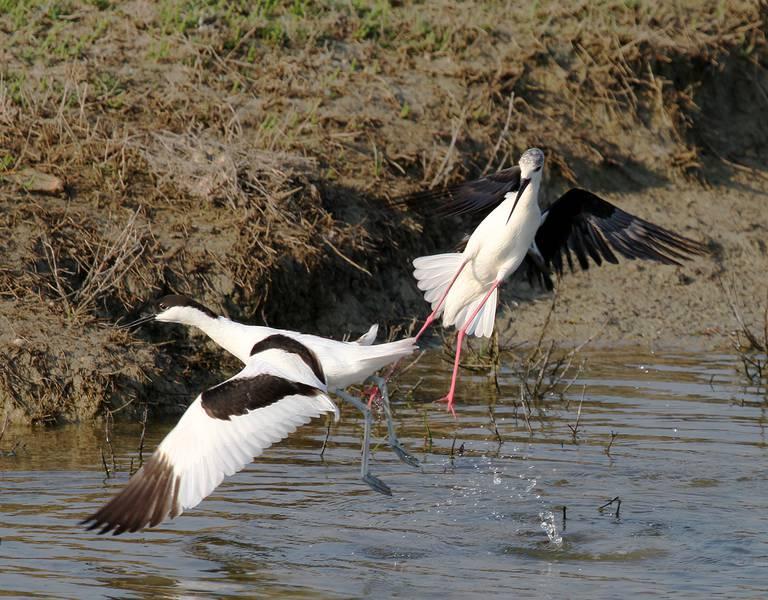 Das Nationale Naturschutzgebiet Lilleau des Niges