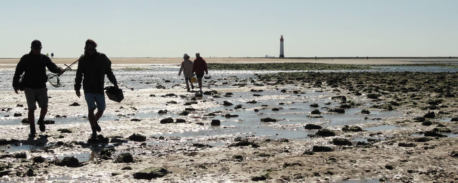 Pêche à pied à l'Ile de ré