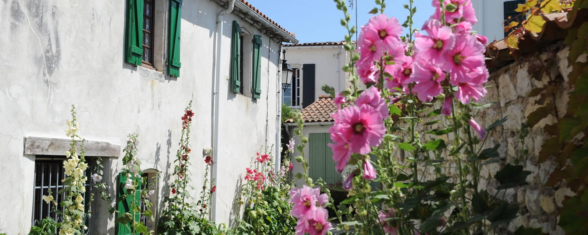 Venelles et roses trémières