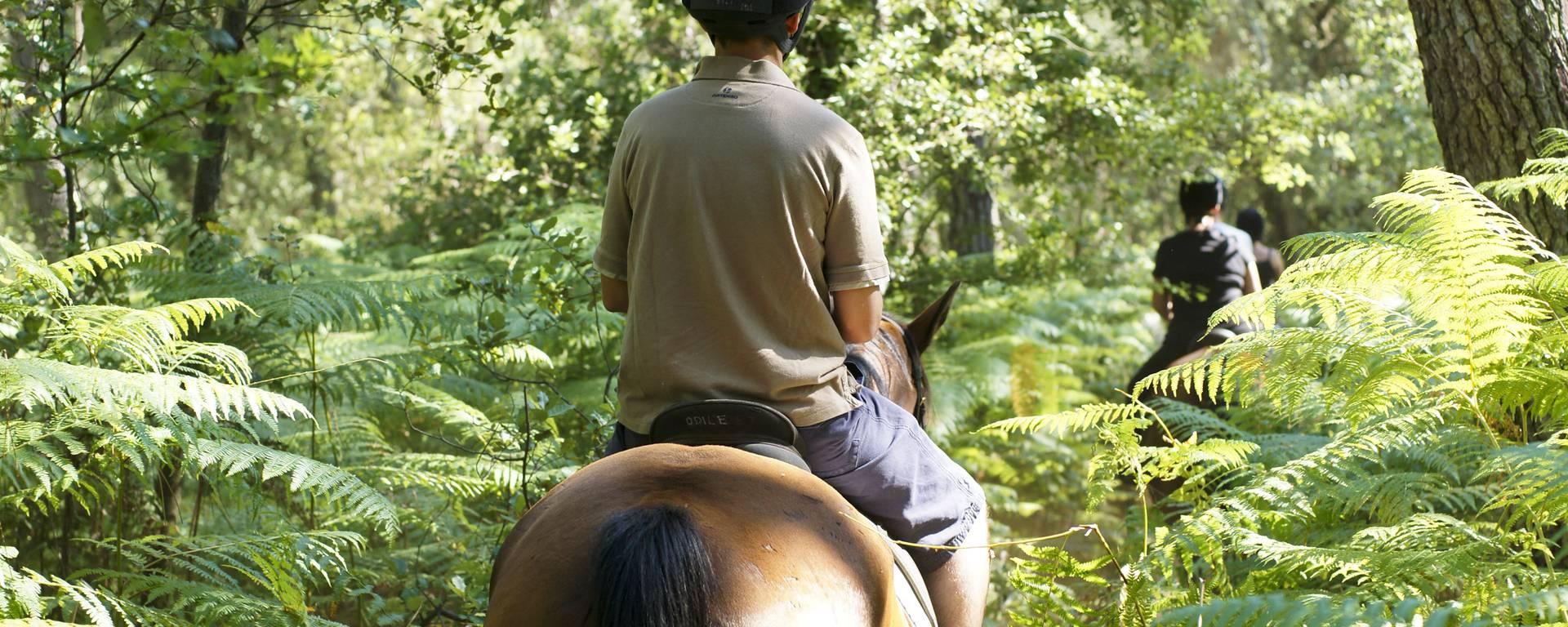 Balade à cheval dans les bois par Yann Werdefroy