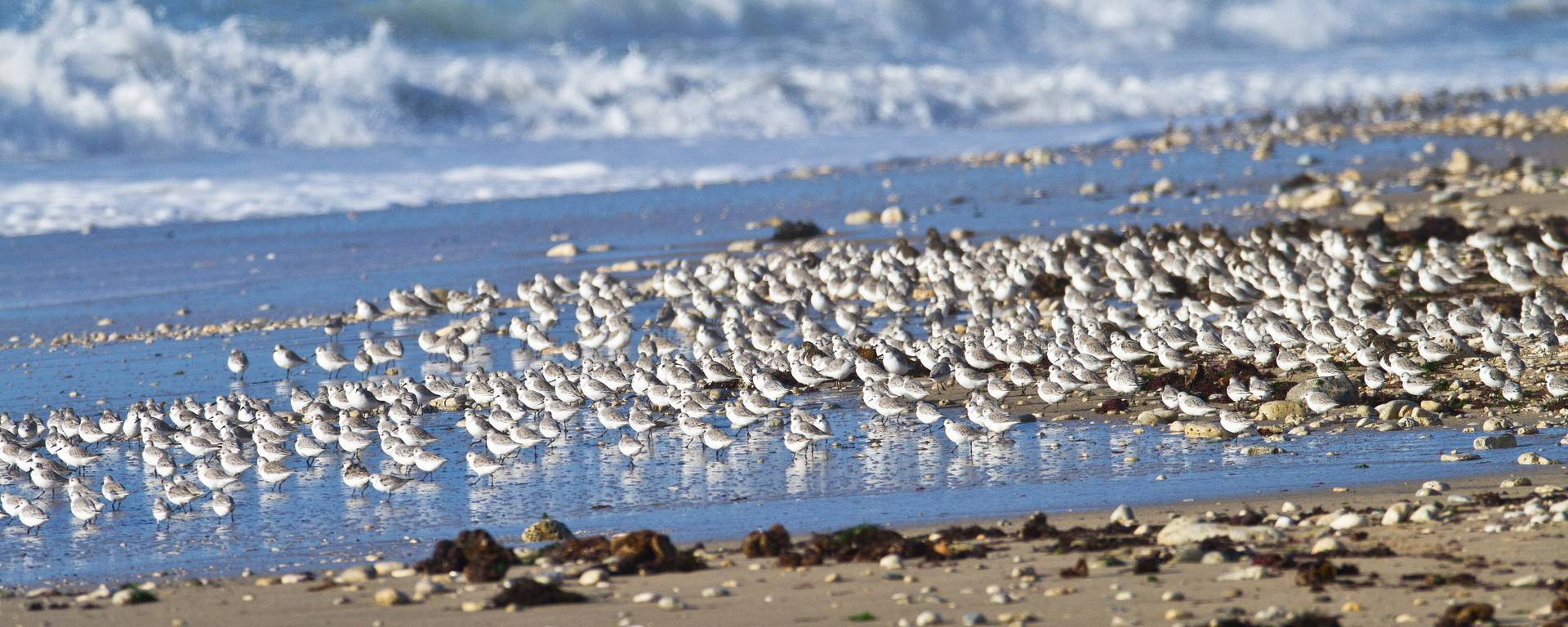 Oiseaux au bord de l'océan par François Blanchard