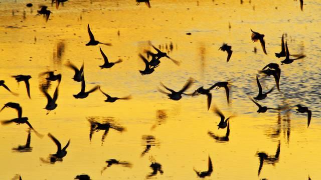 La réserve naturelle Lilleau des Niges de la LPO