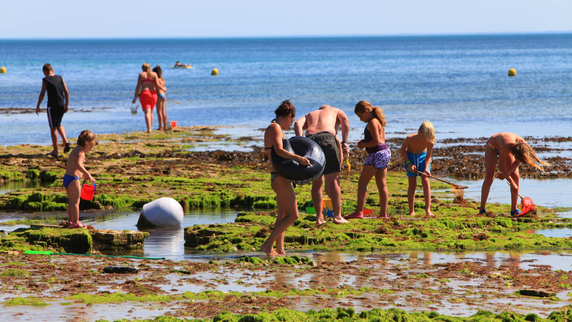 La Pêche à pied avec les enfants sur l'Ile de Ré par François Blanchard